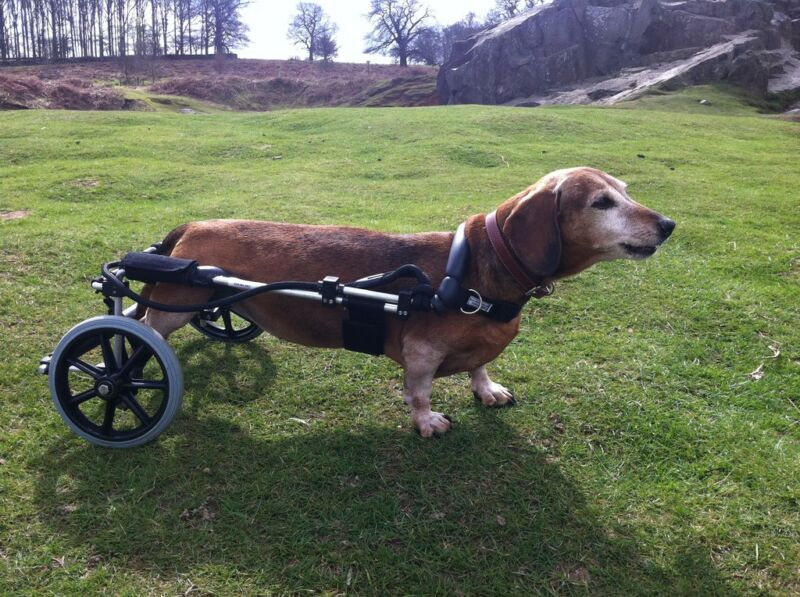 Dog Wheelchair - Adjustable Wheelchairs for Dogs with Disabilities