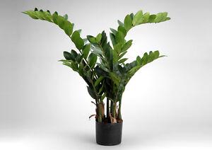 Zamia zamioculcas pianta grassa piante finte artificiali for Zamia pianta
