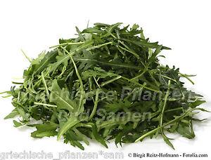 wilder-Rucola-mediterrane-Salat-Gewuerzpflanze