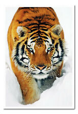 Tiger Poster Snow White Framed Ready To Hang Frame Free P&P