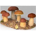 Mushroom Spawn Grow Kit Spore Print