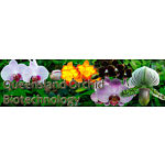 Queensland Orchid Biotechnology