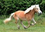 Natural Horse Supplies