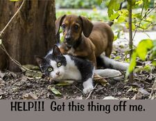 METAL FRIDGE MAGNET Help Get This Thing Off Me Dachshund Dog Cat Humor Funny