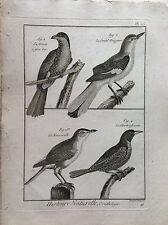 MERLO AFRICANO acquaforte originale 1790 HISTOIRE NATURELLE Ornitologia Uccelli