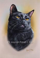 Black Cat Head Study Print by Robert J. May