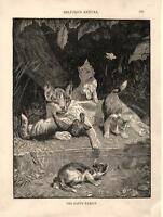 The Happy Family   -  Cat  -  Kittens   -   Original Print     -   1888