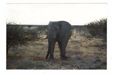 Vintage Photo Elephant African Safari 1990's May17