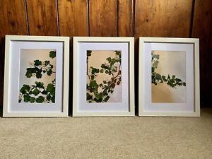 "Botanical Photographic Prints 3 Piece Print Set ""Hawthrorn"" 16"" X 12"" Framed"