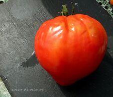graines de tomate cœur de velours vendu en sachet de 30 graines