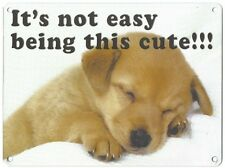IT'S NOT EASY BEING THIS CUTE - LABRADOR PUP DOG - METAL PLAQUE TIN SIGN 1063