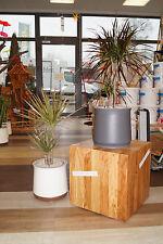 Airy Luftreiniger - neu Pflanztöpfe für private Räume, Gewerbe, Hotels etc.!!