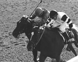 AFFIRMED BEATS ALYDAR 8X10 PHOTO HORSE RACING PICTURE JOCKEY STEVE CAUTHEN