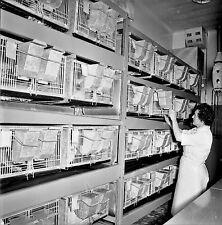 NANTERRE c. 1960 - Laboratoire Fraysse Les Cages - Négatif 6 x 6 - N6 IDF36