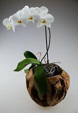 Teakkorb Pflanzkorb Teak Blumenvase Schale Tischdeko Orchidee Deko Vase Korb