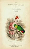 Papageien Inka Kakadu Inkas Chromolithographie 1888 historischer Druck Bild