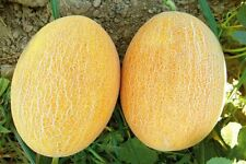 Fruit Seeds Melon Pineapple Super Sweet Early NON GMO Garden Original Package