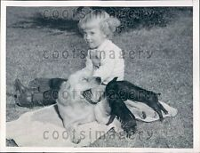 1949 Cute Phoenix AZ Girl With Her Cocker Spaniel Dog & Baby Pigs  Press Photo