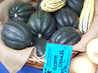 squash, ACORN, TABLE QUEEN, garden vegetable, 15 seeds! GroCo