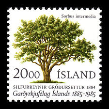 Iceland 1985 - 100th Anniv of the Horticutural Society Flora Tree - Sc 608 MNH