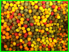 10mm Boilies Mega Mix - Tutti / Pineapple / Scopex / Banana / Halibut / Spicy