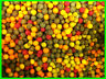 10mm Boilies Mega Mix - Tutti / Pineapple / Scopex / Banana / Halibut / Spicy