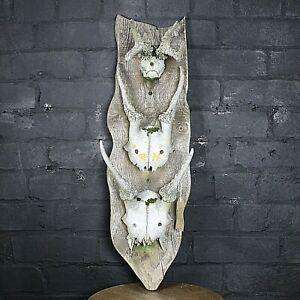 Deer skulls x3 vintage mounted on wood backing board wall decor man cave hunting