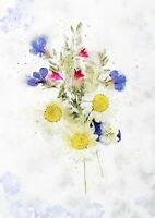 Pressed wild flowers  - watercolour painting unique gift (print)
