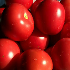 """TOMATO SEEDS """"Tropic"""" 25  seeds FOR WARM HUMID CLIMATES DISEASE RESISTANT"""