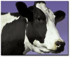 Single Total 54x40cm PRINTS CONTEMPORARY DIGITAL  ART COW PURPLE