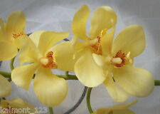 "VANDA ORCHID STEM Beautiful ""Real Touch""  flowers- Yellow, ideal wedding or home"
