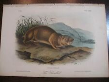Animals 1800-1899 Art Prints