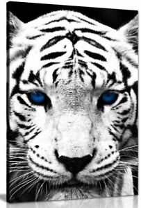White Tiger Blue Eyes Animal Canvas Wall Art Picture Print