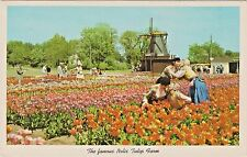 Couples Kissing in Tulip Field - Nelis Tulip Farms Holland, Michigan - 1955 View
