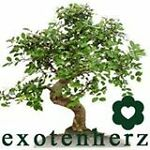 Exotenherz