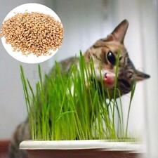 90g Pure Natural Grown Sweet Oat Grass Seed Cat Dog Rabbit Pet Food Wheatgrass