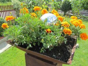Pflanzschale groß 41x41cm Rost Deko Schale für Säule Rost Edelrost Metall Garten