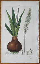 Chaumeton Original Colored Print Botany Squill - 1814