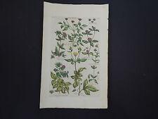 Sir John Hill, Botanical, The Vegetable System 1761-1775 Hemp-Agrimony #23