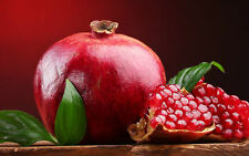 Pomegranate - Punica granatum - 20+ seeds - QUEEN of the FRUITS!