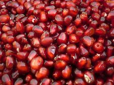 Pomegranate Tree Seeds (punica granatum) 10 Reliable Viable Seeds