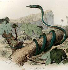 Lacepede's L'Histoire Naturelle - H/Colored Lithograph - c1844- LA SERPENT