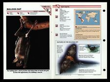 """BULLDOG BAT"" WILD LIFE FACT FILE ANIMAL CARD/HOME SCHOOL STUDY"