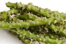 10 Cutting Tinospora cordifolia  Heart-leaved moonseed Guduchi Herb plant Fresh