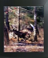 Wild Whitetail Buck Deer Running Animal Wall Decor Wildlife Framed Picture 20x24