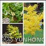 5 Pcs Seeds Ginkgo Biloba Bonsai Unique Species Maidenhair Tree Plants Fruit NEW