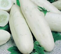 50PCs White Cucumber Cuke Seeds Green Balcony Garden Fruits Home Garden Planting