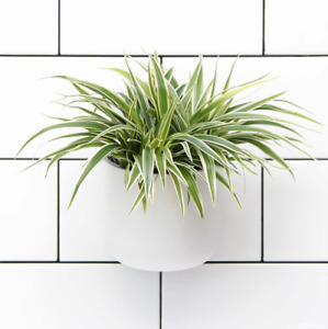 NEW Okidome Suction Wall Planter