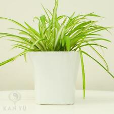 Quadratische Markenlose Deko-Blumentöpfe & -Vasen aus Keramik