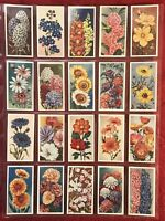 1939 GODFREY PHILLIPS ANNUALS-FLOWERS-COMPLETE 50 CARD SET-TOBACCO CARDS-NRMINT